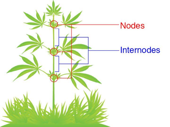 nodes en internodes