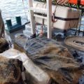 Schip in Rotterdam heeft kilo's wiet onder de romp