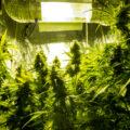 Doe dit goed en creëer een paradijs voor wietplanten