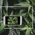 Waarom & hoe je wietplanten fotografeert en filmt