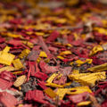 Biokweken #4: mulching voor meesterkwekers