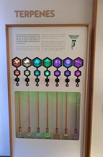 Ruik de terpenen (geurstoffen) van wiet in Cannabis Museum Amsterdam