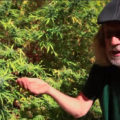 Tips van Jorge Cervantes over kweken tijdens extreme warmte