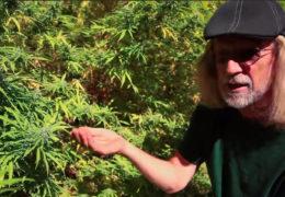 Jorge Cervantes, wiet kweken, extreme warmte, wietplanten beschermen