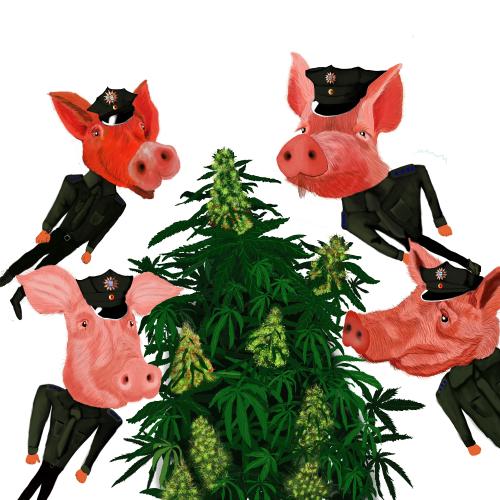 cannabis politie pigs varkens controleren hennepplantages bedrijfspanden