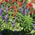 LOL > 34 wietplanten in tuin parlement Vermont