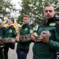 Tijgerpython (!) bewaakt 10 Belgische wietplanten