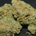 Ghost Train Haze #1: potent(st)e sativa op aarde