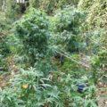 Wijkagent Roland verpest oogstfeest in Gulpens bos