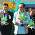 Thaise overheid door dolle heen met mediwiet
