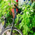 Belgische wietdealer rijdt in op politie... met de fiets