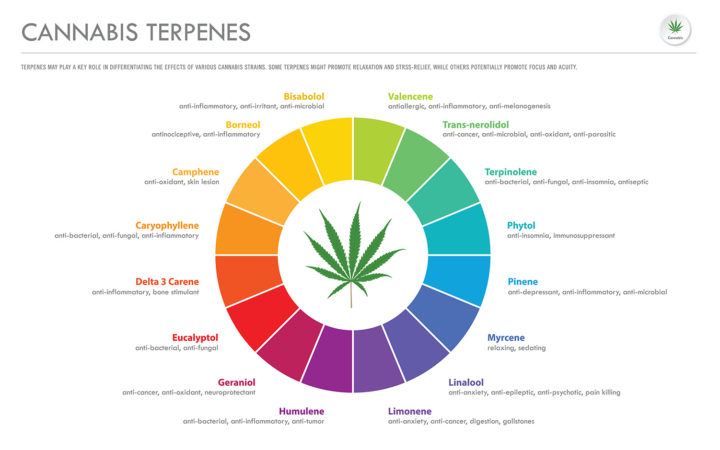 terpenen cannabis