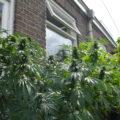 Column • Le cannabis nouveau est arrivé!