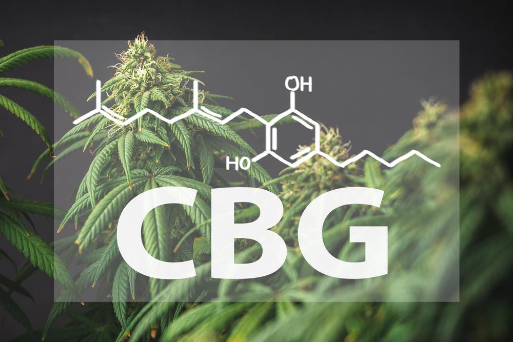 CBG, 'stamcel' der cannabinoïden.