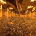 Anonieme tip nekt 1.200 wietplanten in bunker Deelen