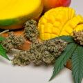 Boost je THC-effect extra met deze 5 voedselproducten!