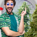 Hardnekkige cannabis kweekmythes #2