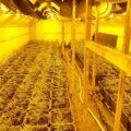 Kwekerij met 1.000 wietplanten opgerold in Deest én in Baak