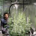 Video: mannelijke wietplanten selecteren & pollen verzamelen om mee te kruisen