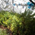 Een wietkwekerij met 300 planten op het Binnenhof, WTF Rutte?!