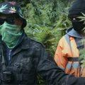 'Binnenkijken' in vette illegale Britse guerrilla-wietkwekerij