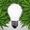 Voordelen van groeien met een 6/2 lichtschema